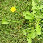 Invasive Weed Control