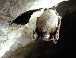 Meet Arizona Bats Live