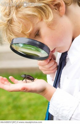 Discovery Summer Camps – Insect Investigators