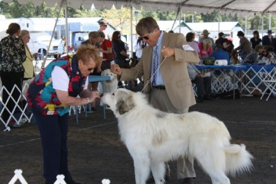 All Breed Dog Show and Obedience Trial