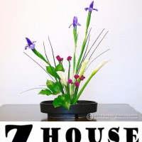 Art in Full Bloom at Z House Gallery