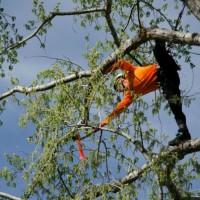Arizona Tree Climbing Championship