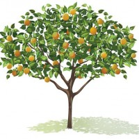 Growing Fruit Trees Workshop