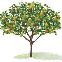 Growing Fruit Trees Workshop