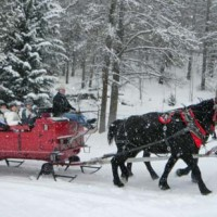 Horse Drawn Sleigh Ride through the Coconino National Forest