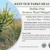 Buffalo Park Invasive Weed Mitigation