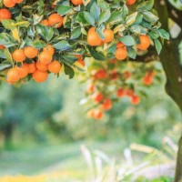 Free Fruit Tree Gardening Workshop
