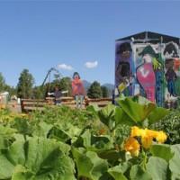 Izabel Street Community Garden
